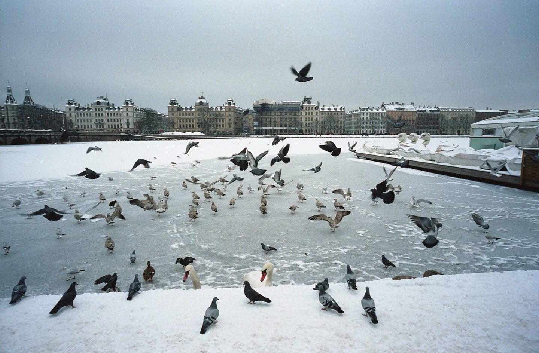Analog Birds