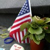 memorial-flag and plant 834518_1920