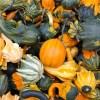 pumpkins-fall-colors-gourds-228474_1920