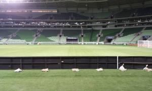 Allianz já rendeu R$ 42 mi ao Palmeiras e está perto de bater meta anual