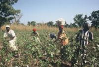Image {focus_keyword} Fairtrade: un'opportunità per il tessile made in Italy 37543 20091199254