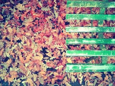 foglie cadute e panchina verde