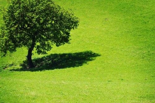 albero-maria-jose-cinti