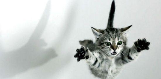 gato-volador
