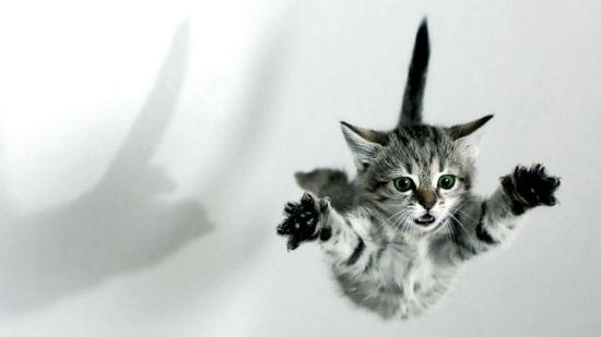 Persona Patea Un Gato y va a Prisión – ¡ANIMALOVERS AL ATAQUE!