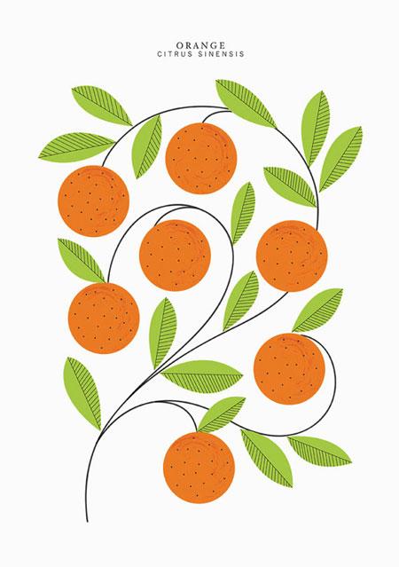 A3 Oranges Print | Sarah Abbott