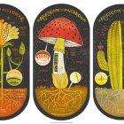 Plant Anatomy Art Prints | Rachel Ignotofsky