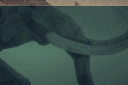 papers.co ac75 elephant illust sea swim art 34 iphone6 plus
