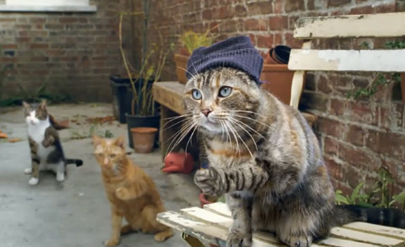 west side story cats