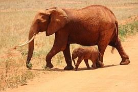 elephant-175798__180