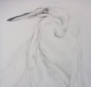 Heron graphite drawing