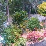 Un petit jardin à l'anglaise à Paris
