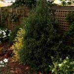 Cacher une palissade avec des plantes d'ombre