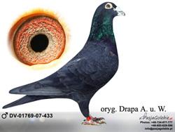 dv-01769-07-433-mini