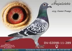 DV-02098-11-289 MINI