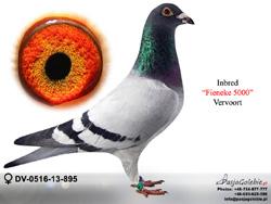 DV-0516-13-895 MINI
