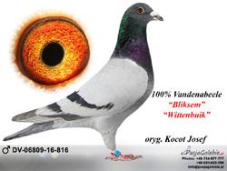 DV-06809-16-816