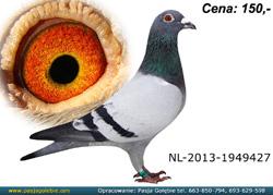nl-13-1949427-mini