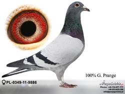PL-0349-11-9886 MINI