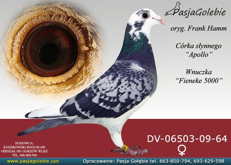 dv-06503-09-64-ec415edf-large