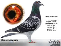 pl-097-12-13434-60fc6970-large