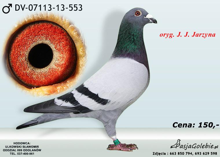 DV-07113-13-553