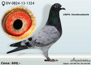 RODOWOD1-DV-0824-13-1324RODOWOD2-DV-0824-13-1324