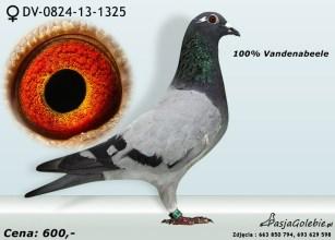 RODOWOD1-DV-0824-13-1325RODOWOD2-DV-0824-13-1325