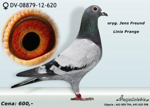 RODOWOD-DV-08879-12-620