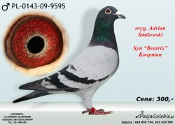 RODOWOD-PL-0143-09-9595