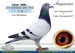 10/RODOWOD-DV-09460-09-700