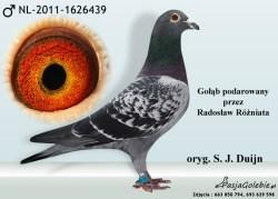 RODOWOD-NL-2011-1626439