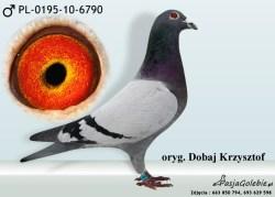 RODOWOD-PL-0195-10-6790