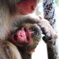 高崎山自然動物園 赤ちゃんザル