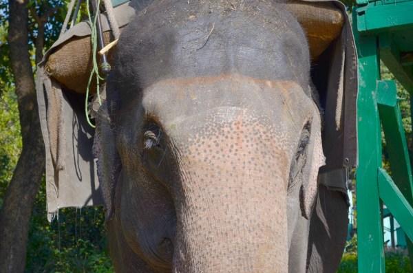 At Dudhwa National park... for the elephant safari