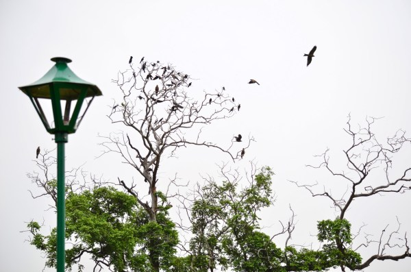 .The leafless tree with bird. Picture clicked by me in Lodhi Garden, New Delhi