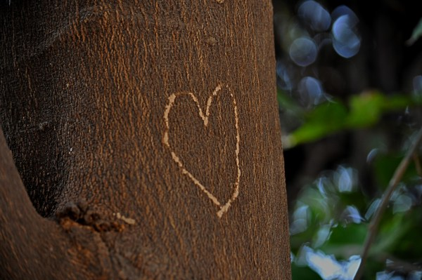 Of symbols of love engraved on trees