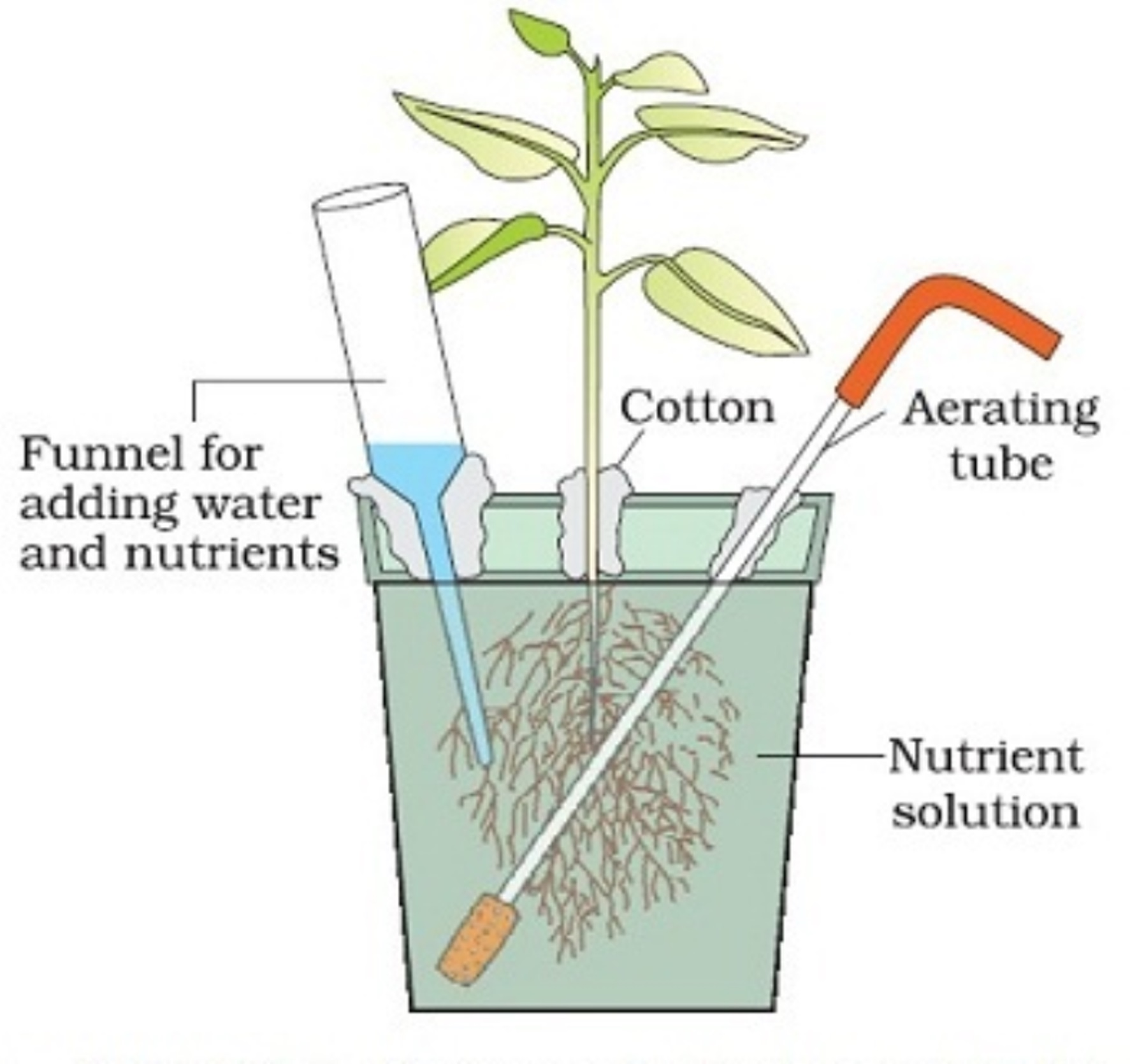mineral requirements of plants With continuously flowing solutions have also been developed in order to grow plants with constant properties, the importance of quantifying the nutrients to be supplied in relation to plant requirements has been emphasized (ingestad 1982 ) since the amounts of nutrients required per unit of time increase with increasing.