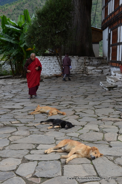 Dogs in Temples