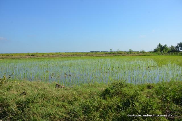 Rice Fields of Yara