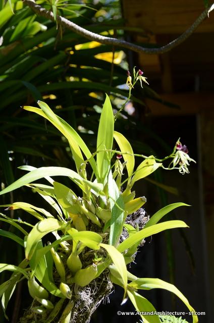 Fern Garden Santiago de Cuba