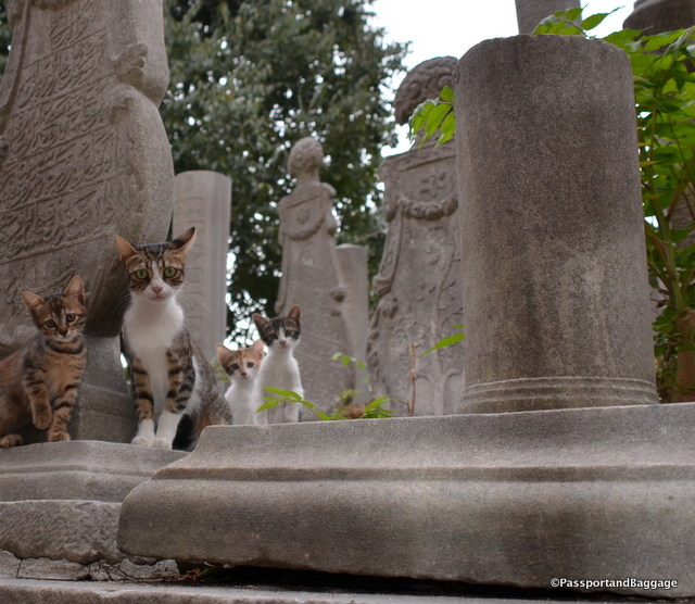 An what is a cemetery without a few thousand cats?