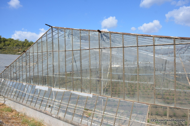 At one time all the greenhouses were glass, this has given way to plastic