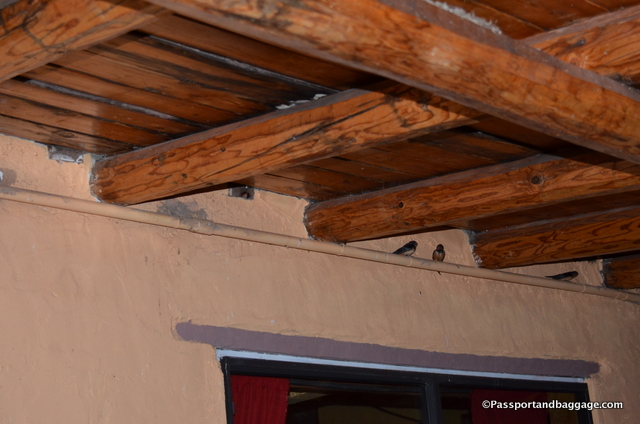 Swallows in the eaves of the Hotel Paraiso del Oso