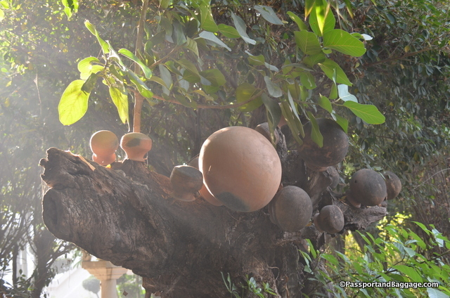 These over turned clay pots in the tree were at the Thai temple, I don't have a real explanation, but the concept of a human being an empty vessel seems like a lovely explanation