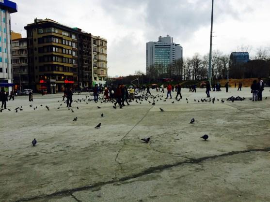 Pigeons in Taksim Square