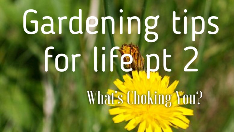 gardening tips for life weeds