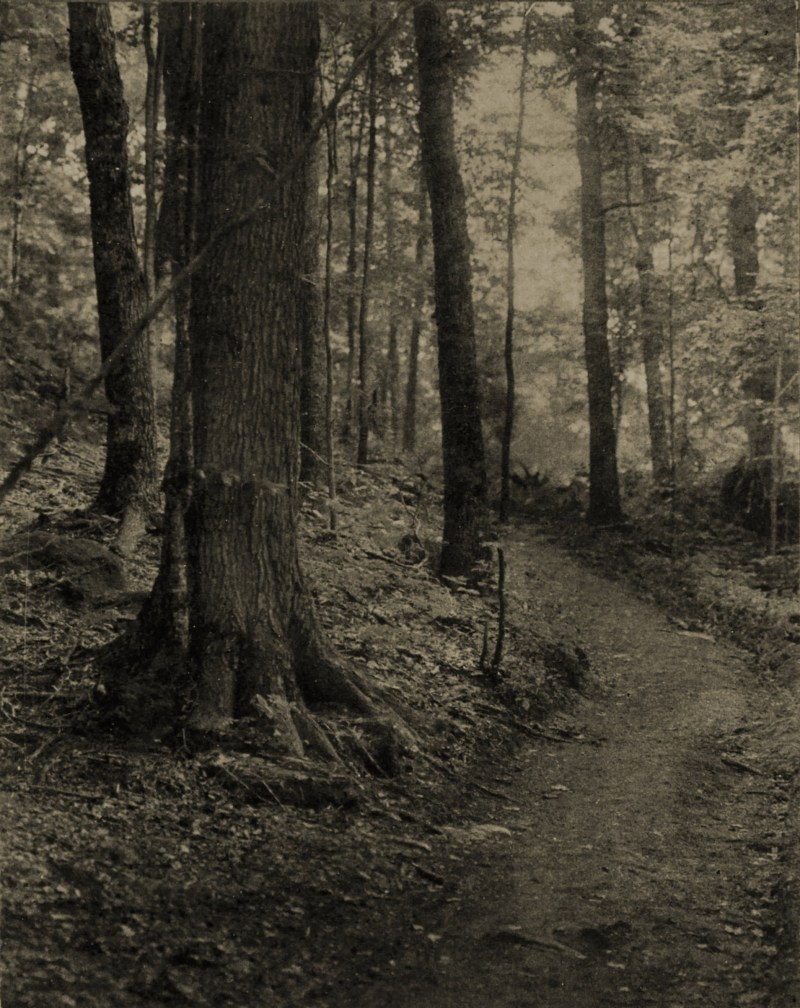 Adirondack Woods by William T. Knox about 1908