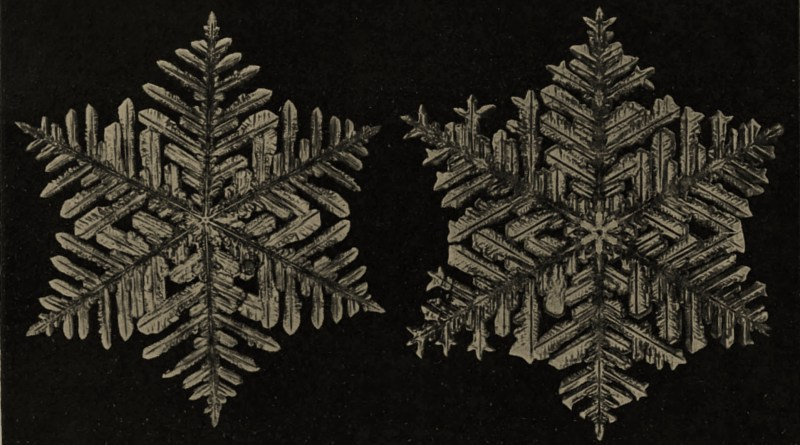 Snow Crystals by Wilson A. Bentley about 1908