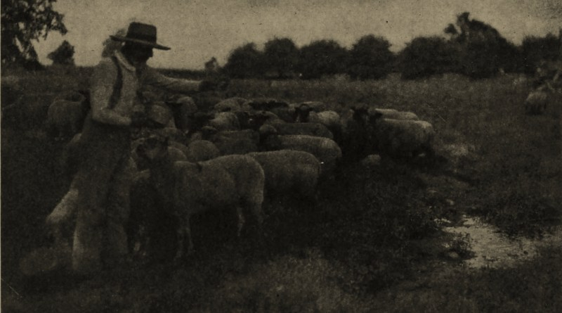 The Flock by C. F. Clarke about 1908